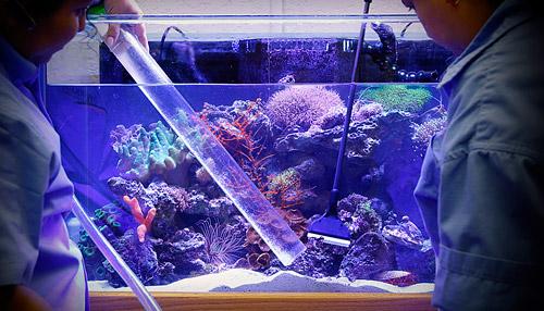 Морской аквариум в домашних условиях